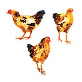 Set with orange-red watercolor hens and roosters