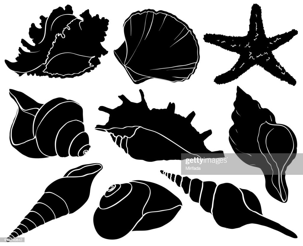 Set with seashells and starfish silhouettes, sea mollusk collection