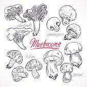 set with sketch mushrooms