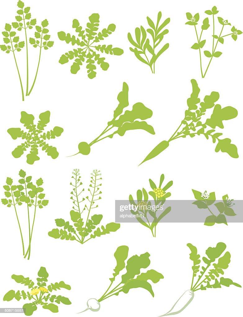 Seven herbs of spring. Material of porridge. Customs of Japan