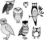Seven Owls