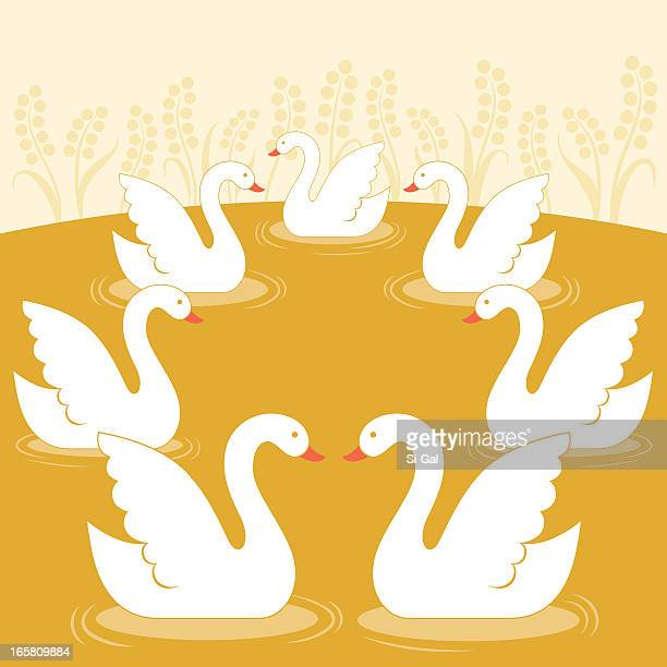 seven swans a swimming - seventh day of christmas stock illustrations