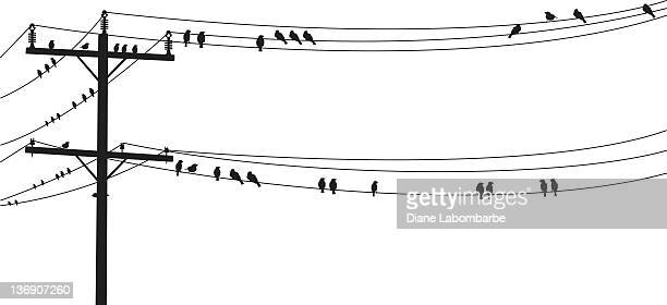several b&w birds perched on a old telephone wire - telephone line stock illustrations, clip art, cartoons, & icons