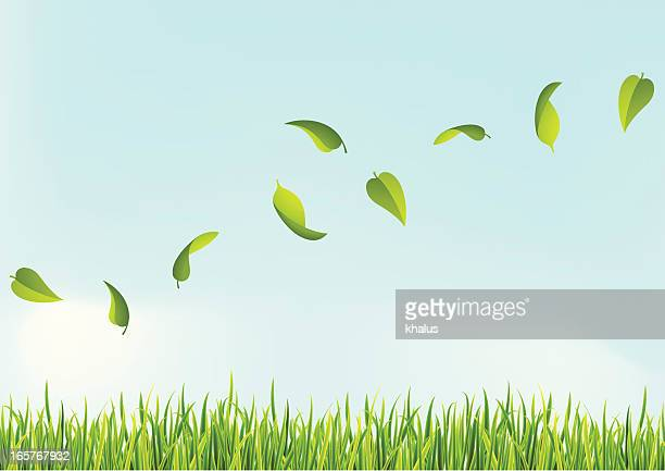 several leaves flying above the grass - wind stock illustrations