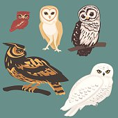 Several species of Owls