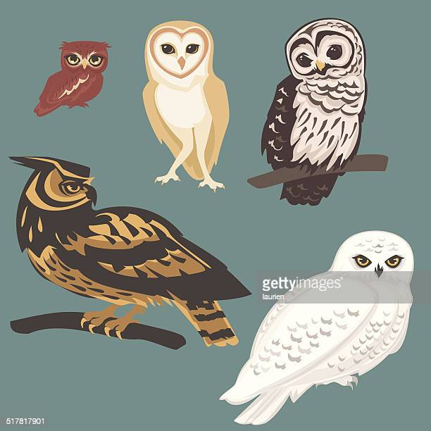 several species of owls - owl stock illustrations