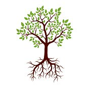 Shape of Tree, Roots and Green Leafs. Vector Illustration.
