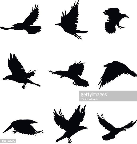 shapes of flying crows - crow stock illustrations