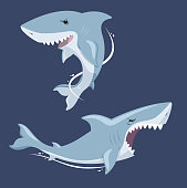Shark attack jaw teeth mad furious terror view