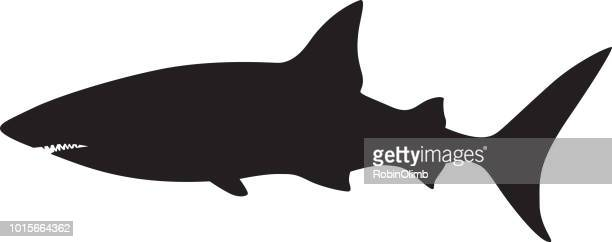 shark silhouette - sharks stock illustrations