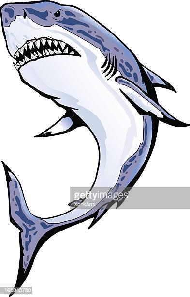 shark - great white shark stock illustrations, clip art, cartoons, & icons