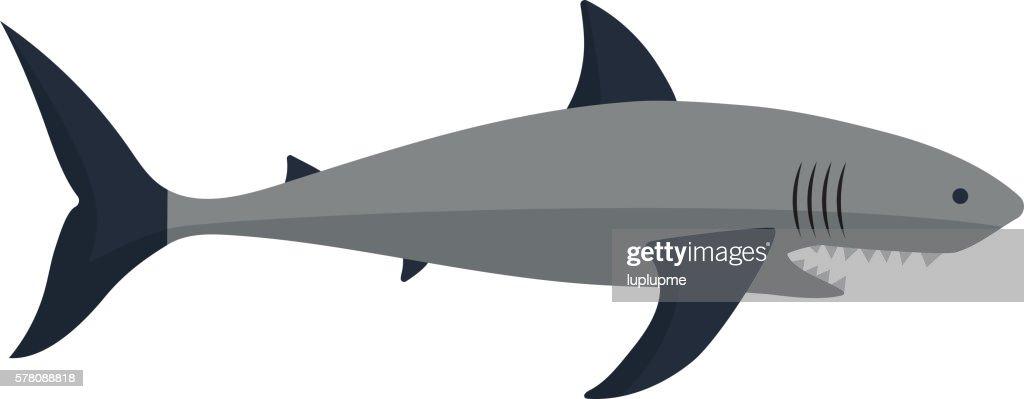 Shark vector illustration.