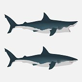 Shark with open and close mouth. big white fish. Flat isolated vector illustration on a white background. Realistic appearance with dimming and light