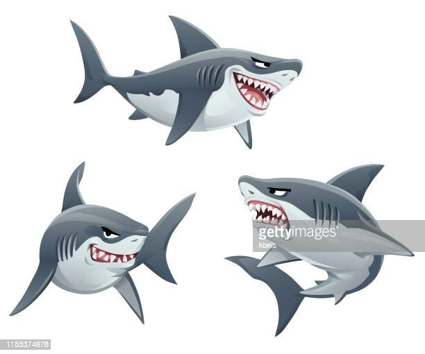 sharks - sharks stock illustrations