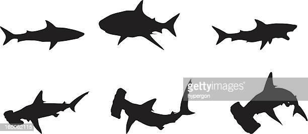 illustrations, cliparts, dessins animés et icônes de sharks - requin