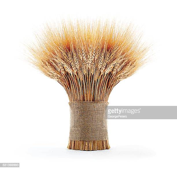 sheaf of wheat - crop plant stock illustrations