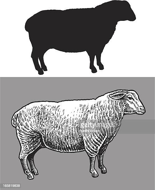 sheep - farm animal - sheep stock illustrations, clip art, cartoons, & icons