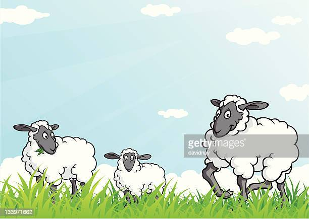 sheep graze - sheep stock illustrations, clip art, cartoons, & icons