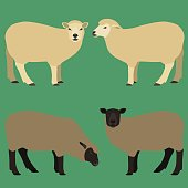 Sheeps in different poses.