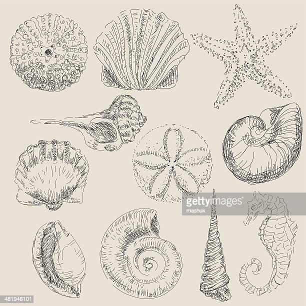 illustrations, cliparts, dessins animés et icônes de shell - escargot