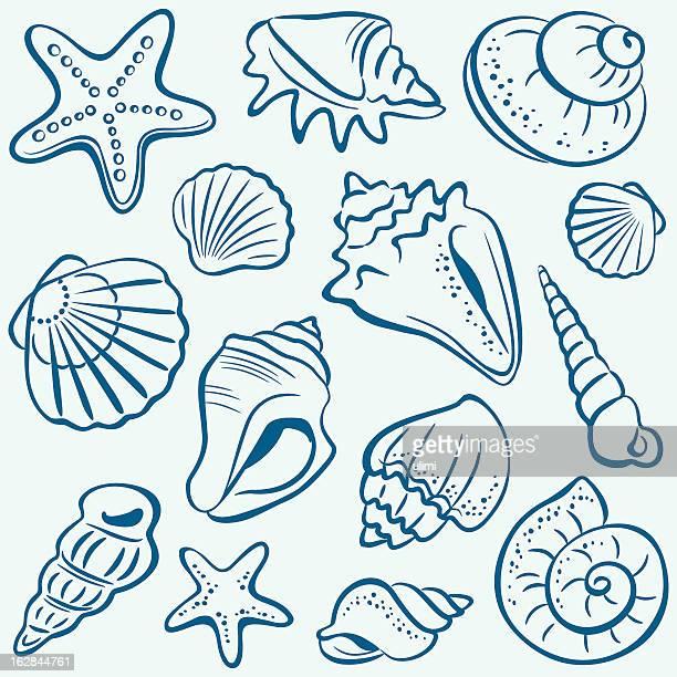 ilustraciones, imágenes clip art, dibujos animados e iconos de stock de cápsulas vacías - concha de mar