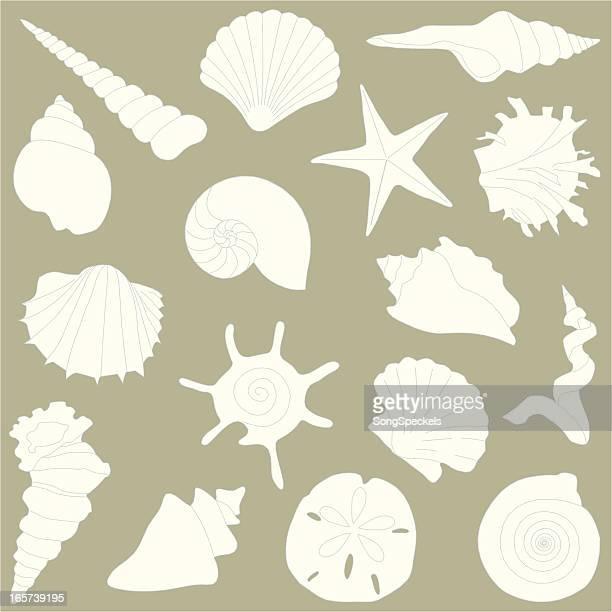 - Shells