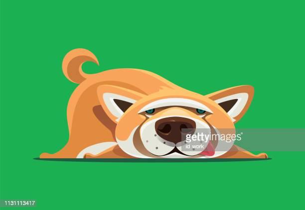 illustrations, cliparts, dessins animés et icônes de shiba inu chien couché - mou