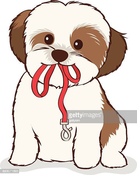 shih tzu puppy with leash in mouth - dog leash stock illustrations, clip art, cartoons, & icons