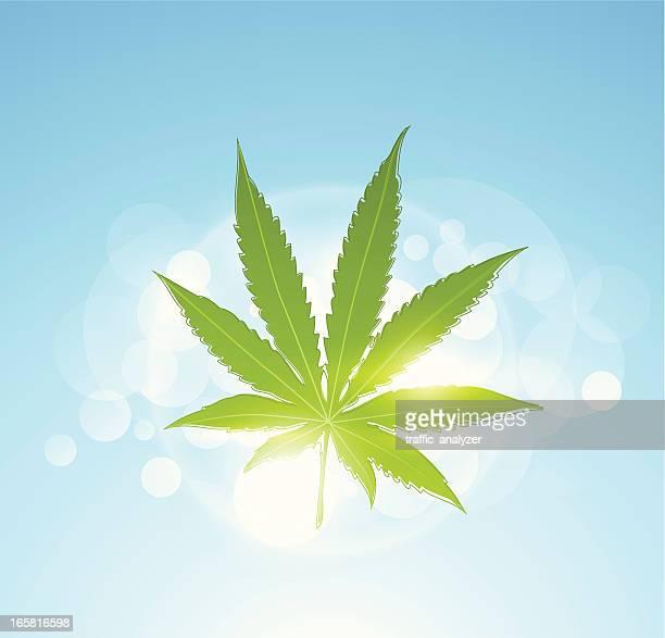 shiny marijuana - hemp stock illustrations, clip art, cartoons, & icons