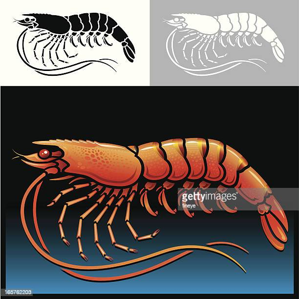 Shrimp Icon Set