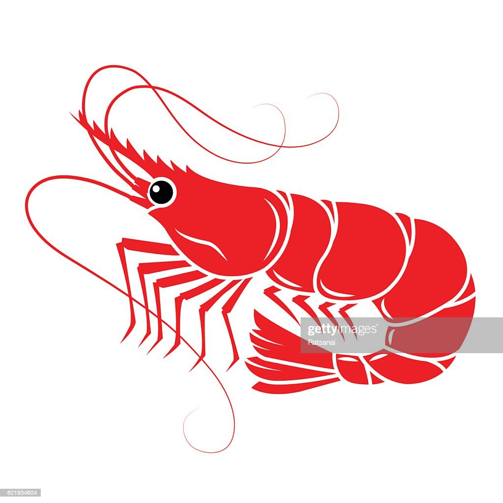 shrimp : stock illustration