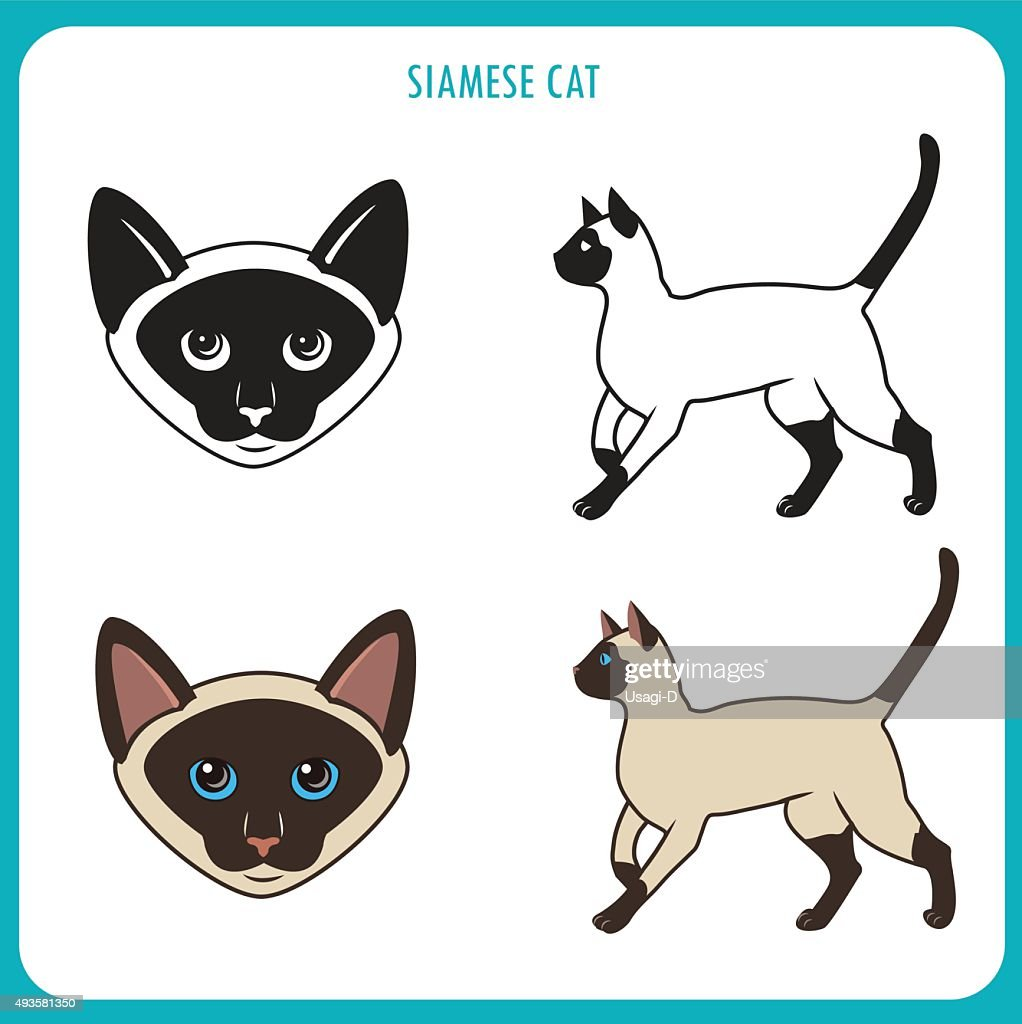 Siamese Cat Set. Face And Body.
