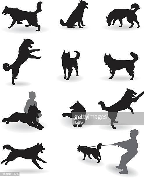 ilustraciones, imágenes clip art, dibujos animados e iconos de stock de husky siberiano - salto de longitud