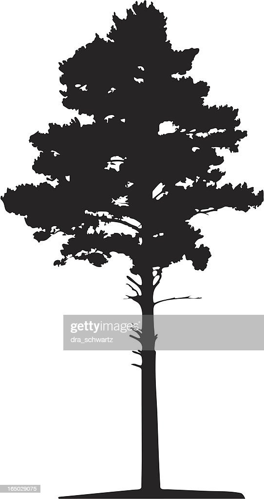 Siberian pine tree, Vector