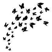 Silhouette Black Fly Flock Of Butterflies. Vector
