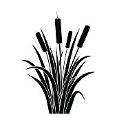 Silhouette Black Water Reed Plant Cattails Leaf. Vector