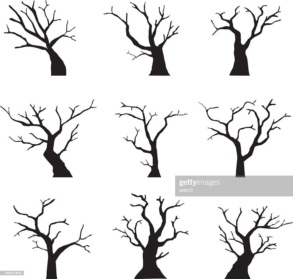 Silhouette dead tree