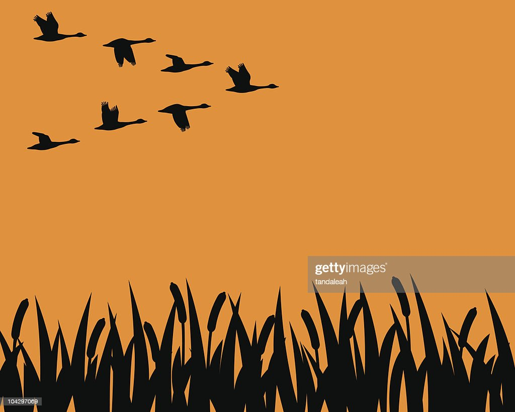 Silhouette geese and marsh