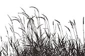 Silhouette illustration of grass plants with seeds