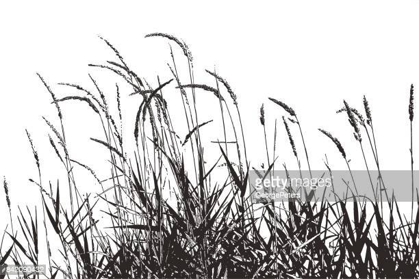 silhouette illustration of grass plants with seeds - reed grass family stock illustrations