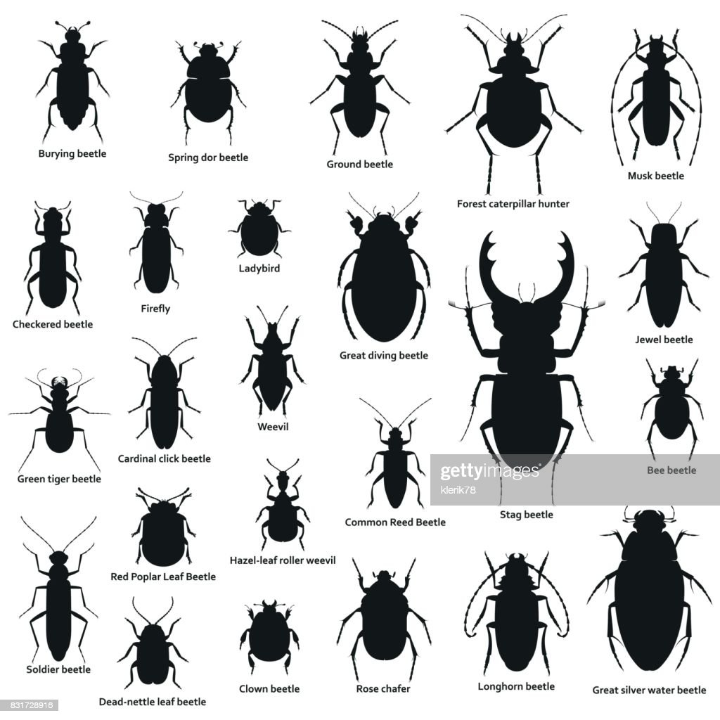 Silhouette insect set isolated on the white