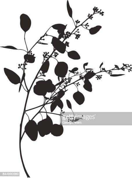 silhouette line art of a eucalyptus branch and leaves - eucalyptus tree stock illustrations