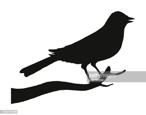 silhouette of a bird - perching stock illustrations