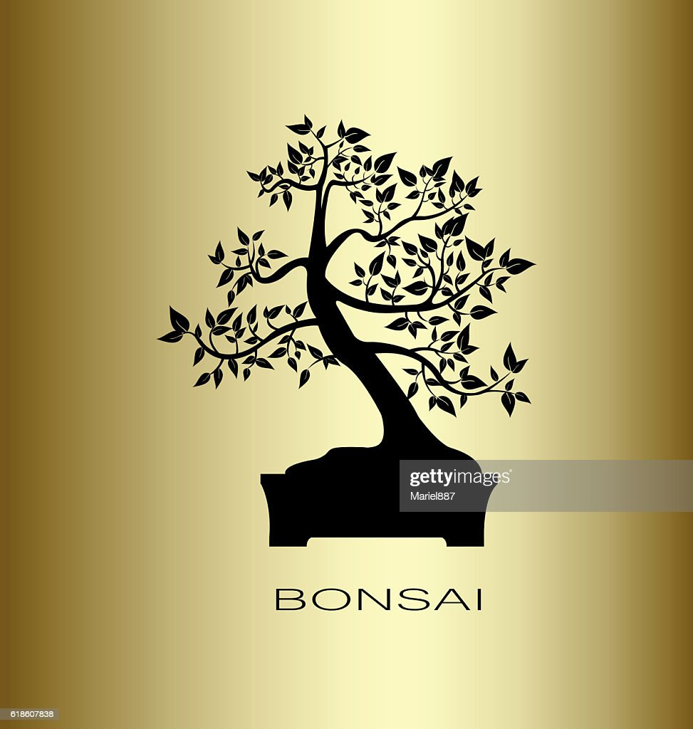 Silhouette of a bonsai tree