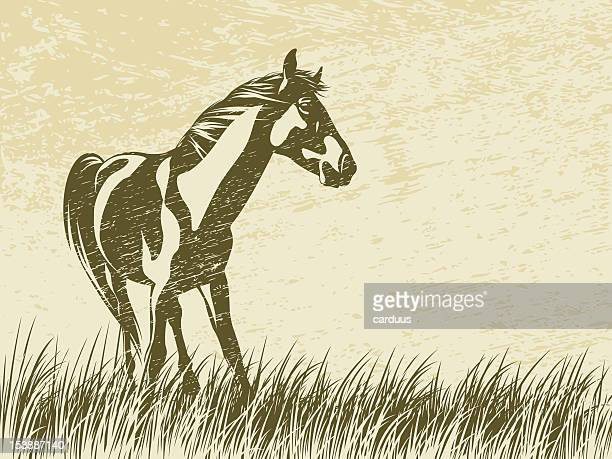 silhouette of a horse - stallion stock illustrations, clip art, cartoons, & icons