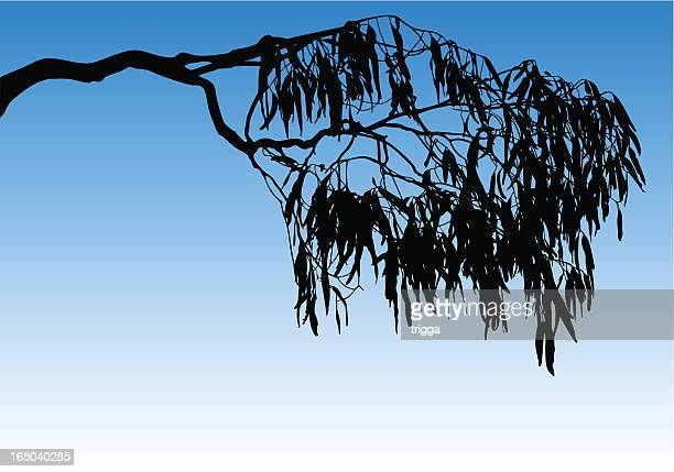 Silhouette of a tree branch and leaves against a blue sky