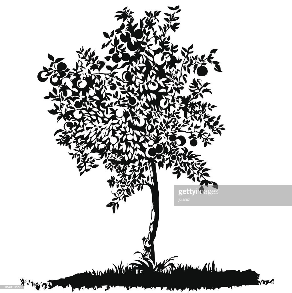 Silhouette of a young apple tree