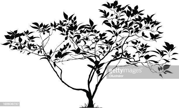 Silhouette of a young tree