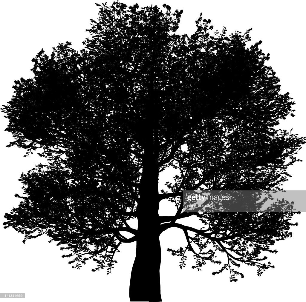 Silhouette of an oak tree on a white background