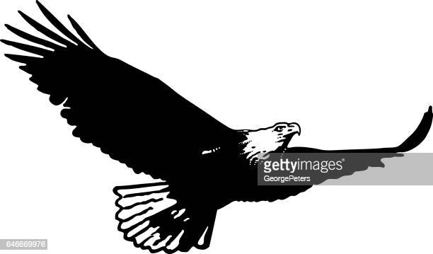 silhouette of bald eagle flying flying and hunting - eagle bird stock illustrations, clip art, cartoons, & icons